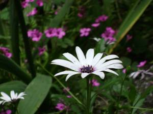 Detalle de Flor en Garganta de los Infiernos