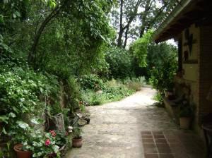 """Camino en """"La Casa del Bosque"""""""