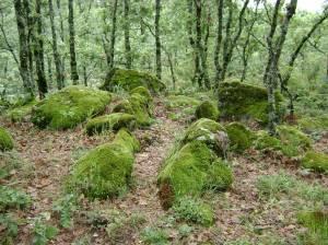 Piedras con pelusilla, en Gaganta de los Infiernos