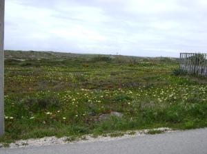 Flores cerca de la playa